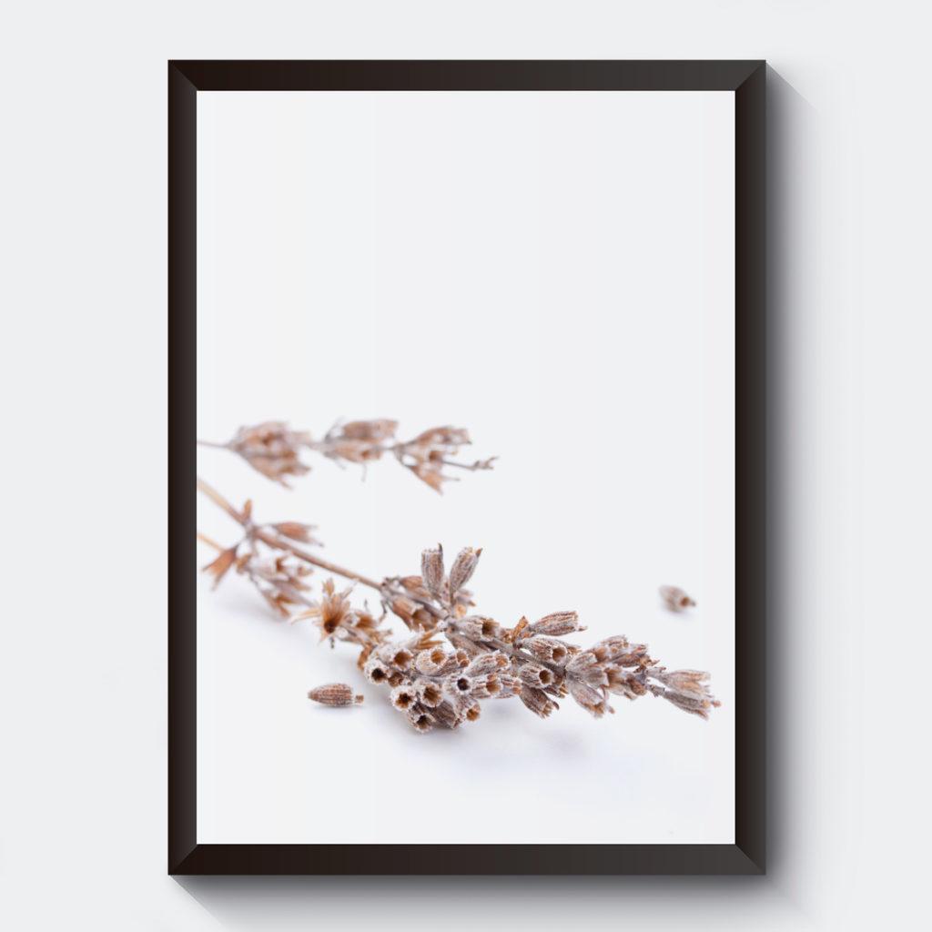 Torkad blomma naturmotiv affisch