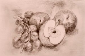 Bleistiftzeichnung von Äpfeln und Weintrauben auf dem Tisch liegend