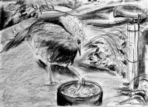 Bleistiftzeichnung einer Haubentaube, die ein Bein im Futternapf hat