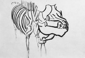 Kohlezeichnung von einem Tiergerippe