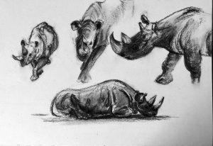 Kohlezeichnung von Nashörnern
