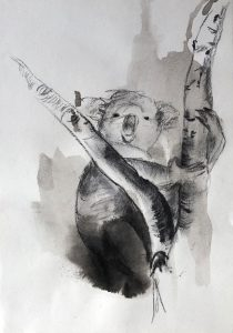 Tusche- und Kohlezeichnung von einem Koala zwischen einer Astgabelung sitzend, Vorderansicht