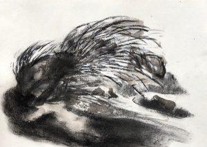 Tusche- und Kohlezeichnung von einem Stachelschwein