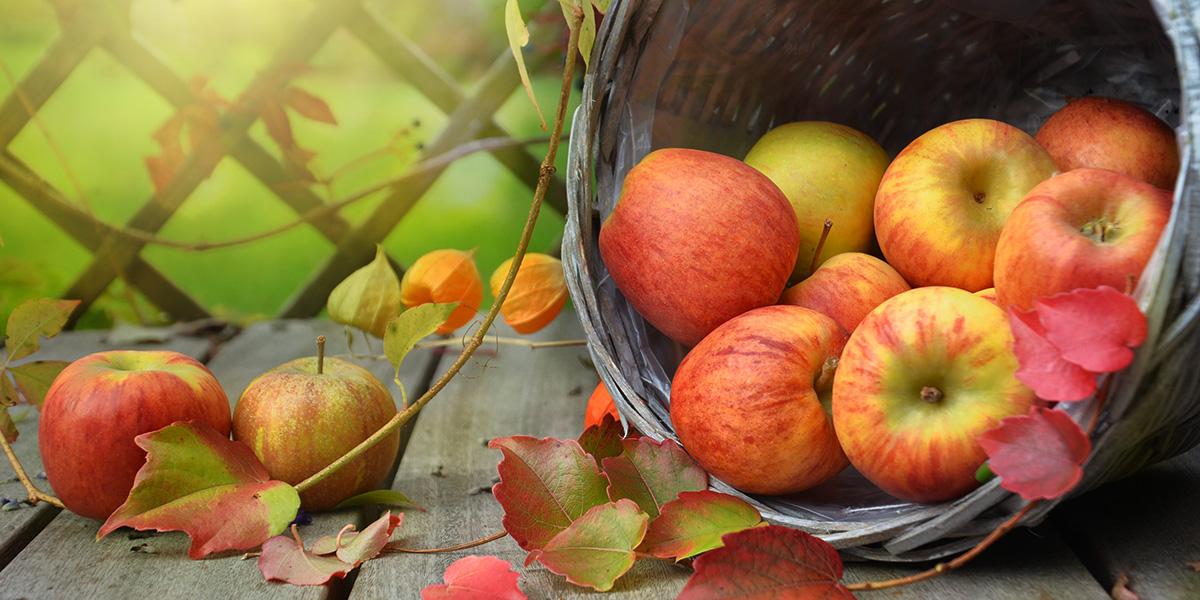 apples-1776744 hems