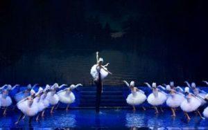 Swan Lake On Water | Live People Agency
