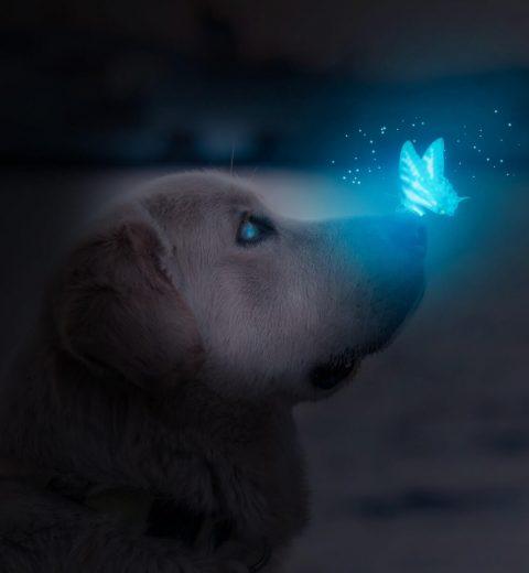 førerhund sommerfugl