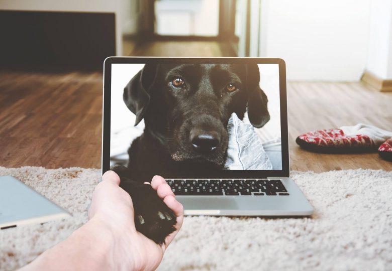 online hundetræning