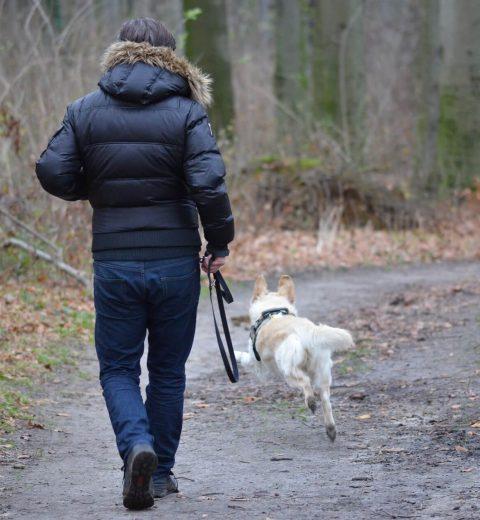 hundeskov hund løs i skov