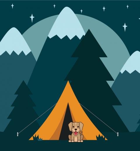 sov i telt med hund
