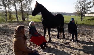 Meditatie bij de paarden