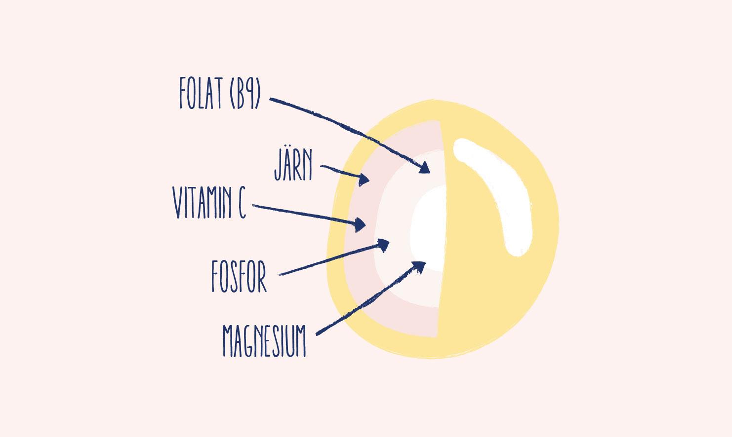 Lupinbönans näringsämnen – vitaminer och mineraler
