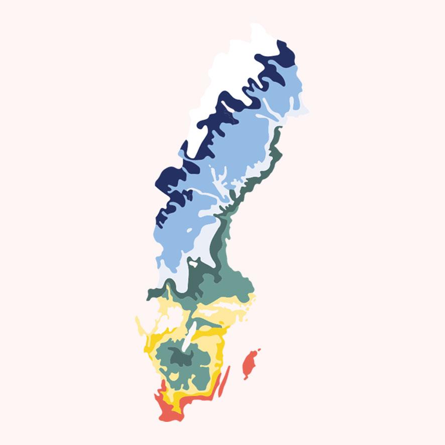 Sveriges odlingszoner – var kan lupinbönor odlas?