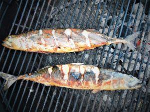 Makrelfiskeri i Limfjorden er spændende og efter fangst kan man røge makrellerne med det samme.