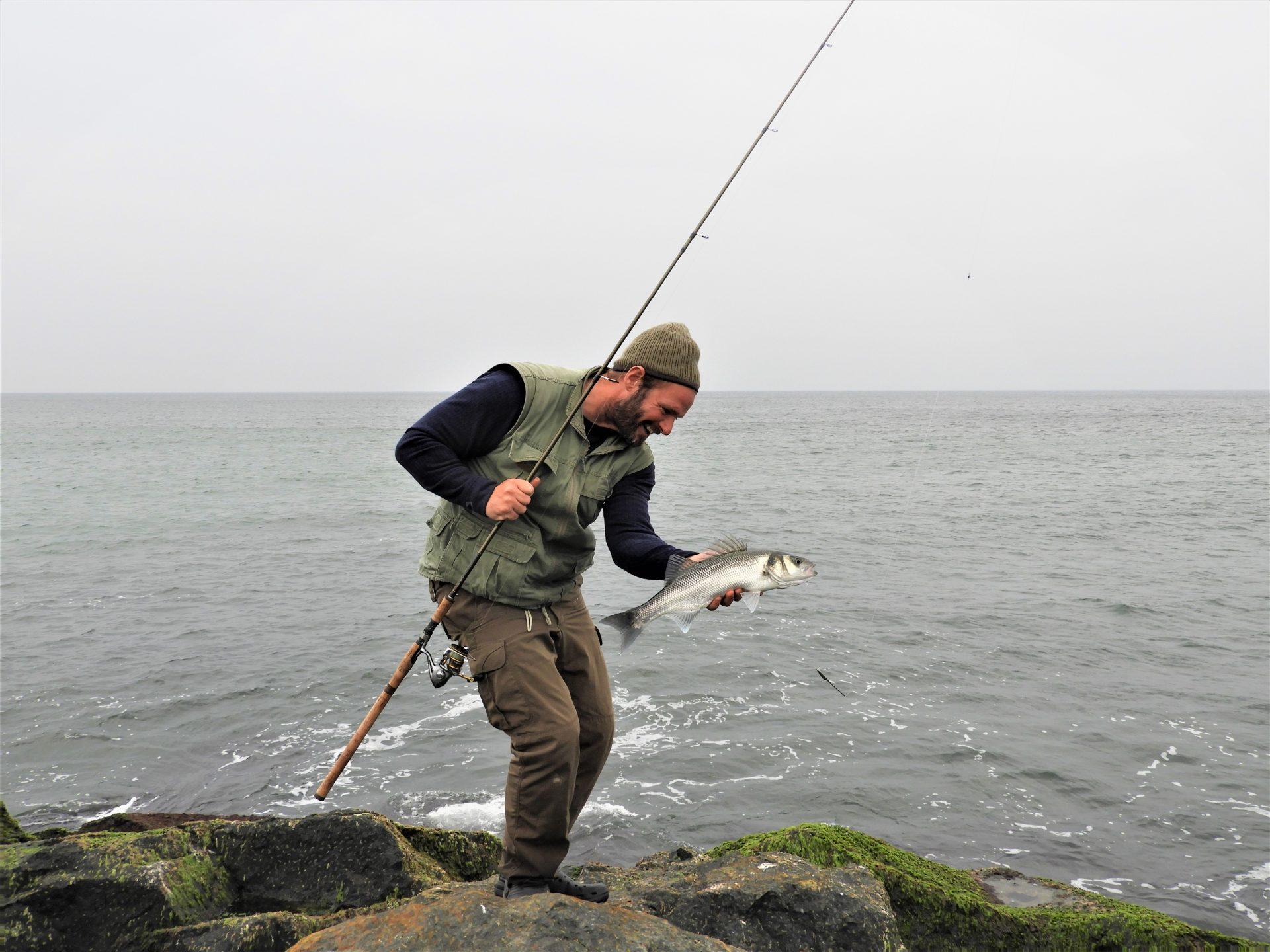 Havbars ved Agger Tange er der mange af hvert år. Tangene ligger ved udmundingen af Limfjorden på vestsiden.