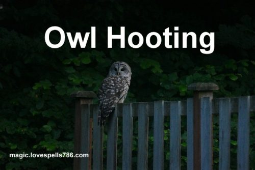 omen of owl hooting outside your bedroom