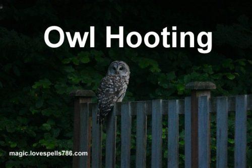 omen of owl hooting outside your bedroom