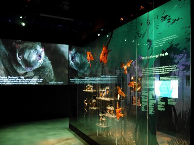 LKCNHM – Celebrating Biodiversity