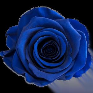 Blue Rose | Millionbox.se