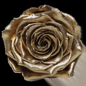 Gold Rose   Millionbox.se