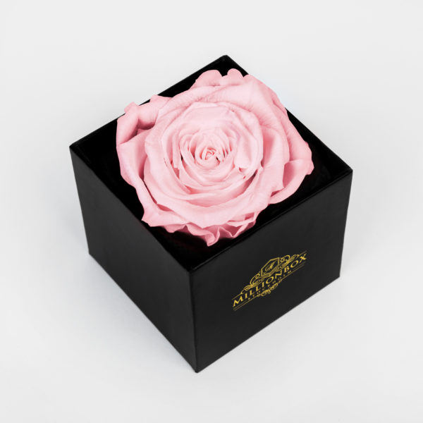 Levante Piccolo with Pink Rose   Millionbox.se