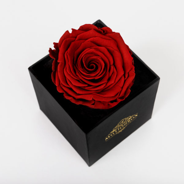 Levante Piccolo with Red Rose   Millionbox.se