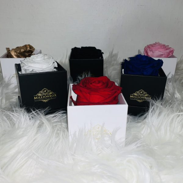 Millionbox Mini Collection | Millionbox.se