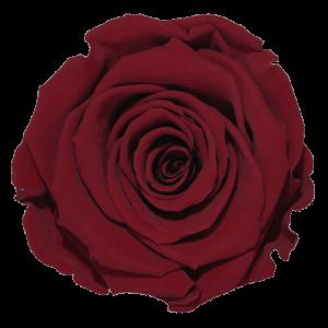 Red Rose   Millionbox.se