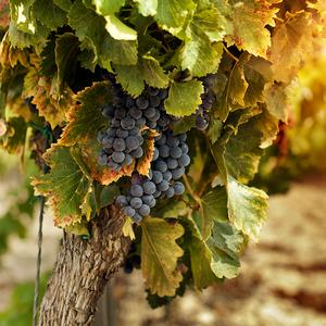 Spaanse Kwaliteitswijnen