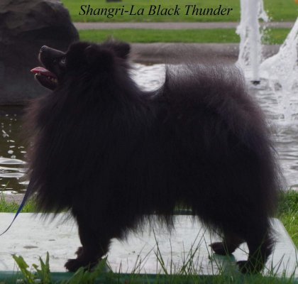 Shangri-La Black Thunder