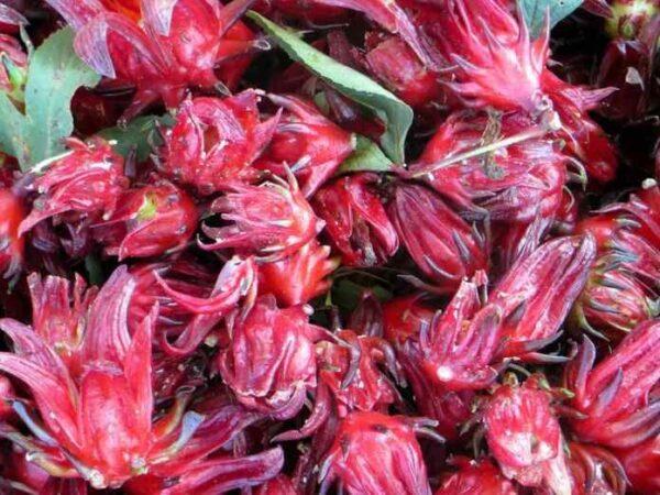 Grossiste Fleurs feuilles hibiscus (bissap) bio