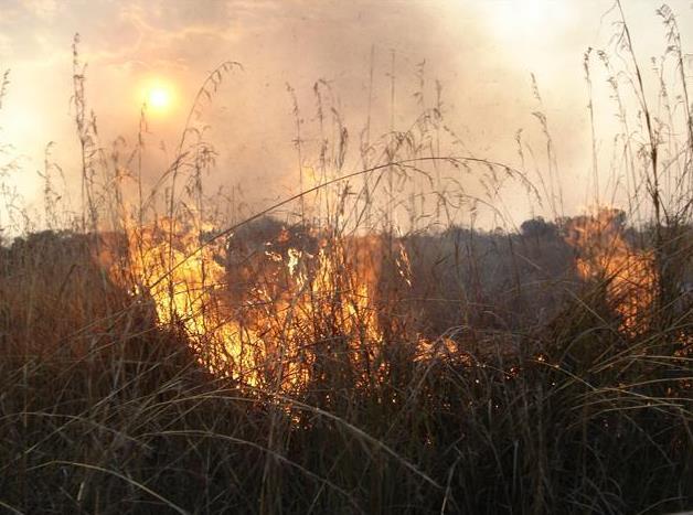 Slash and burn farming depletes soil