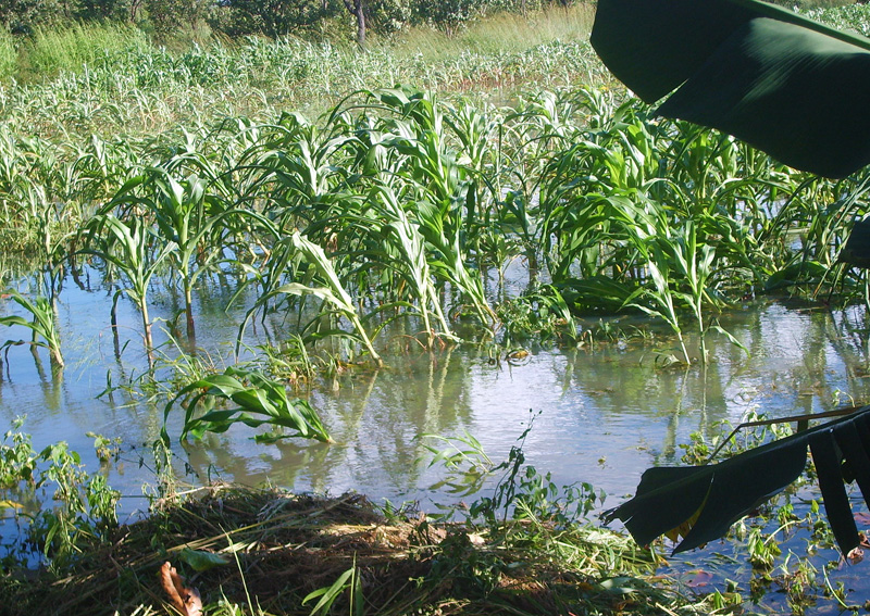 Crops flooded 2007 lead to poor harvest and starvation for many
