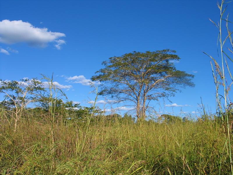Mpongwe District Zambia Photo Copyright Kathleen Paulsson