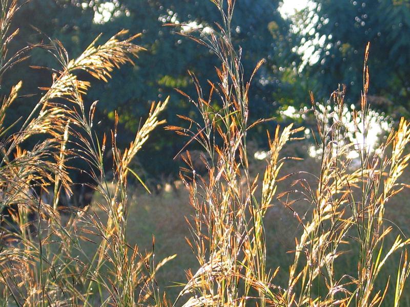 Grass in morning light Photo Copyright Kathleen Paulsson