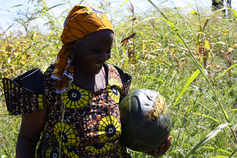 MBA Womens Wing project Pumpkin harvest