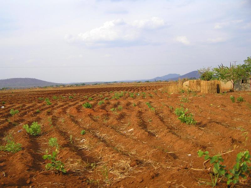 Farm land Copperbelt Zambia