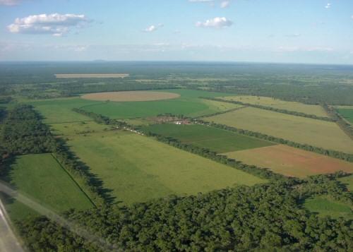 MBA Farm