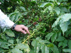 MBA Farm Coffee