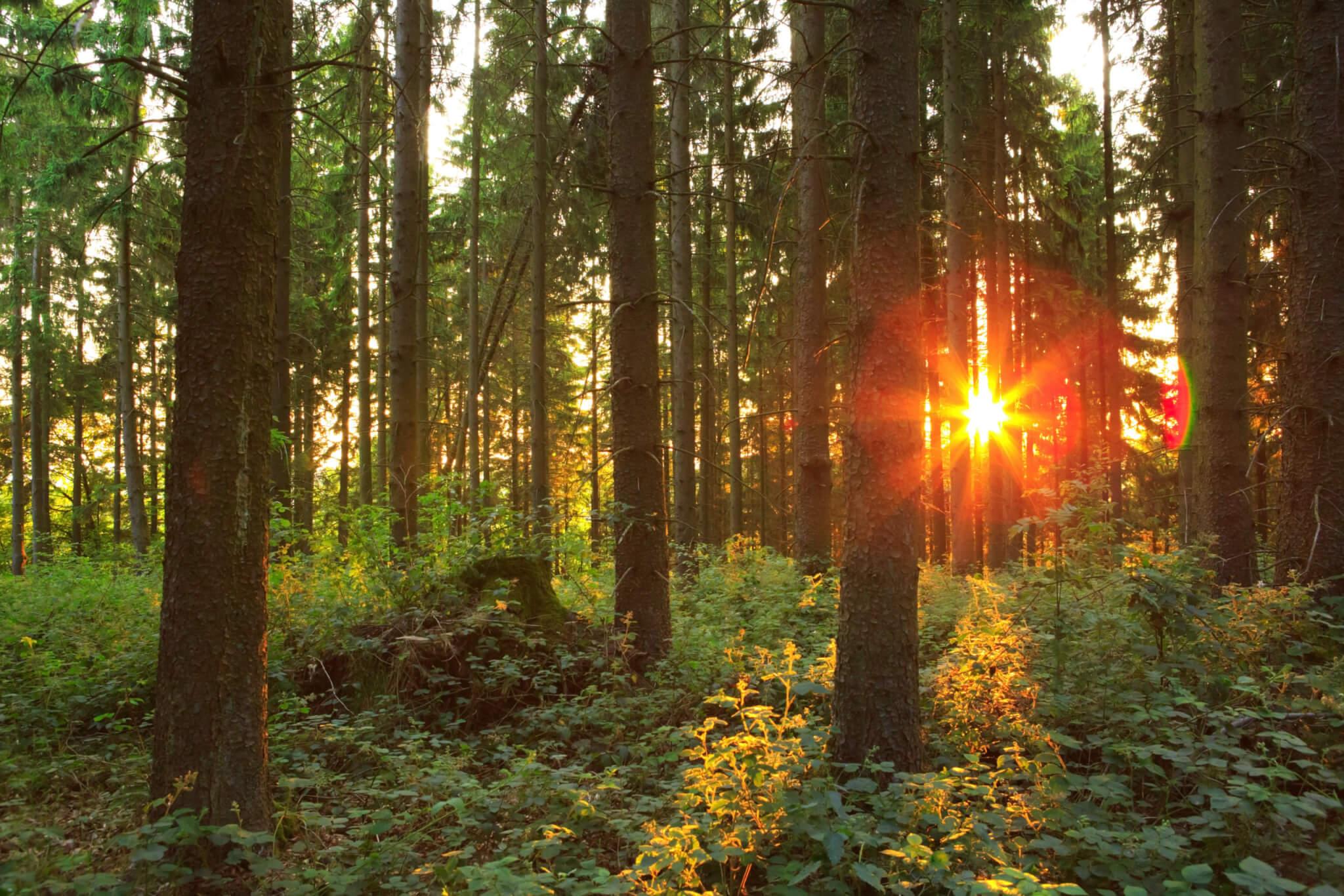 Skogsstyrelsen har valt att teckna ramavtal gällande medieträning för chefer och medarbetare med mPowerment Scandinavia AB