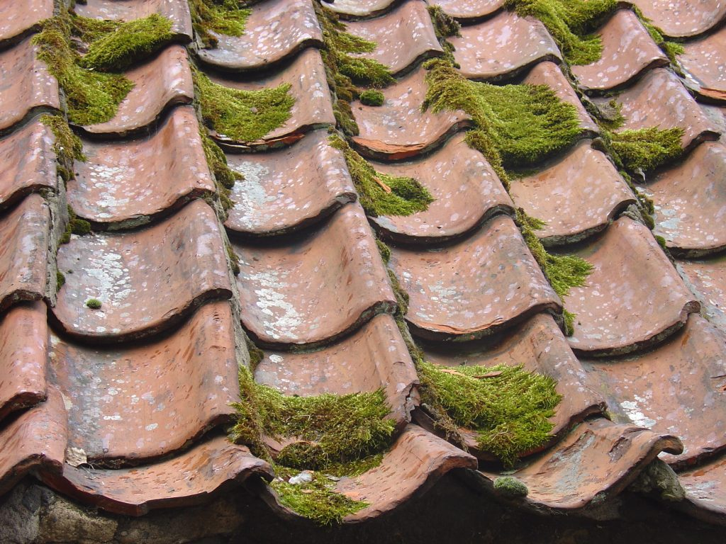 Moss in the roof