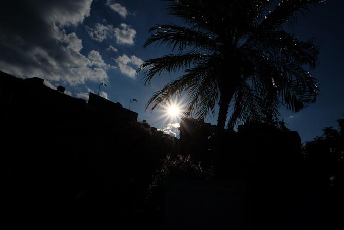 Sol og palme
