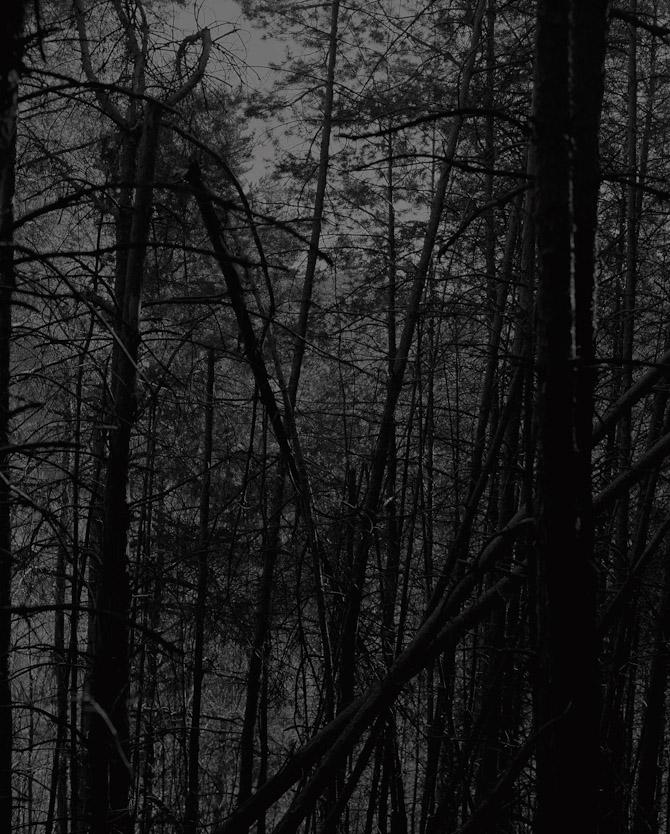 Wood 131015