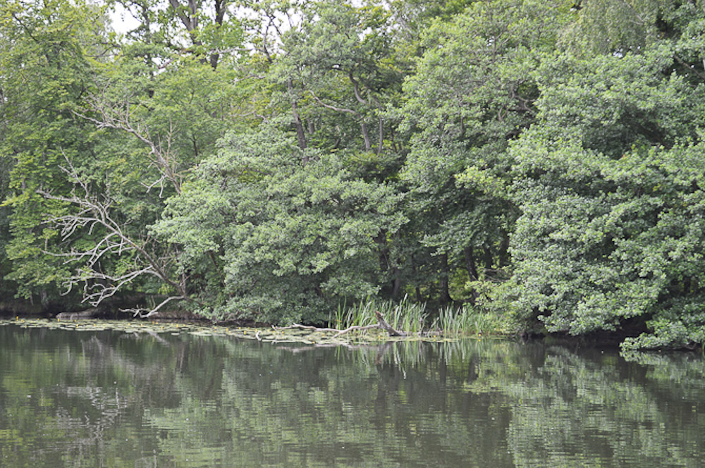 "Her har jeg tilbragt mange stunder. Vi er på Esrum sø - i den ""hemmelige"" bugt."