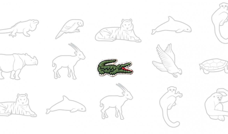 lacoste krokodille