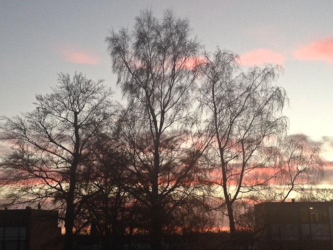 Solnedgang og afpillet træ