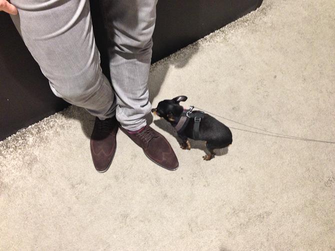 Størrelse hund