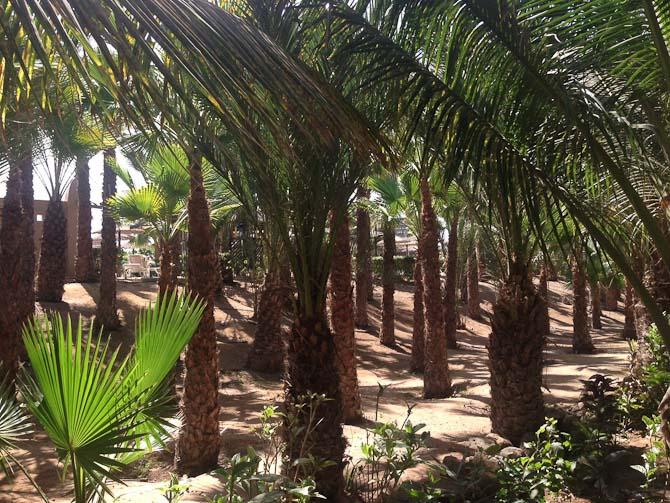 Jeg var i palmehaven