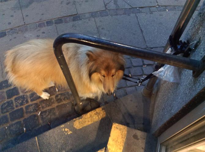 Lassie ved Netto
