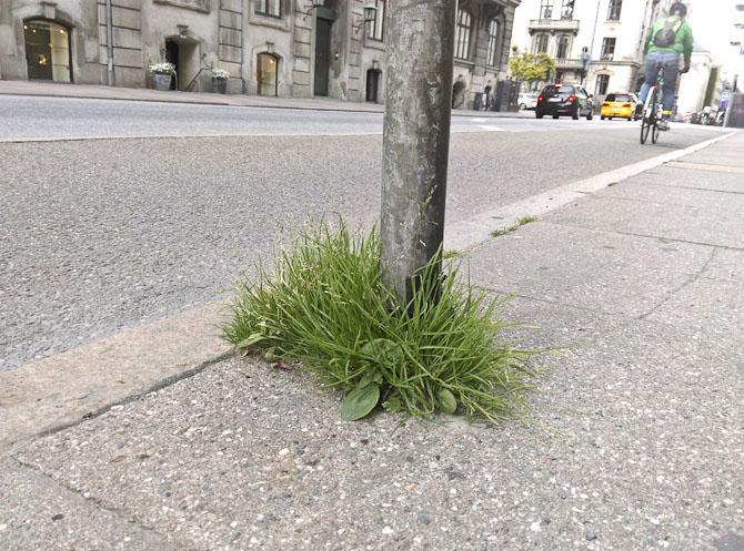 Lidt grønt i byen
