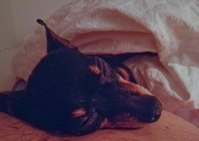 Der er intet som en træt hund